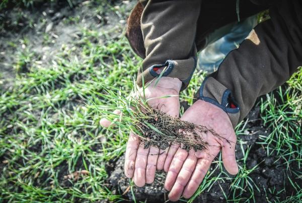 Fazy rozwojowe zbóż