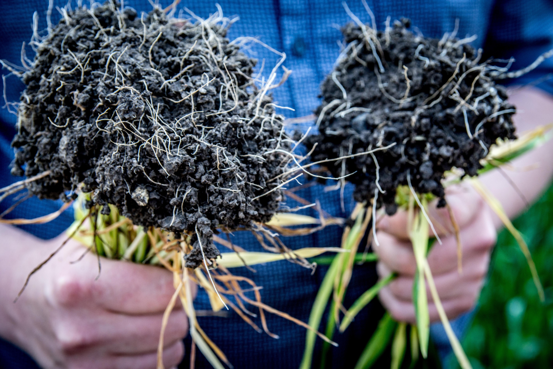 Rozkład resztek pożniwnych – zadbaj o glebę.