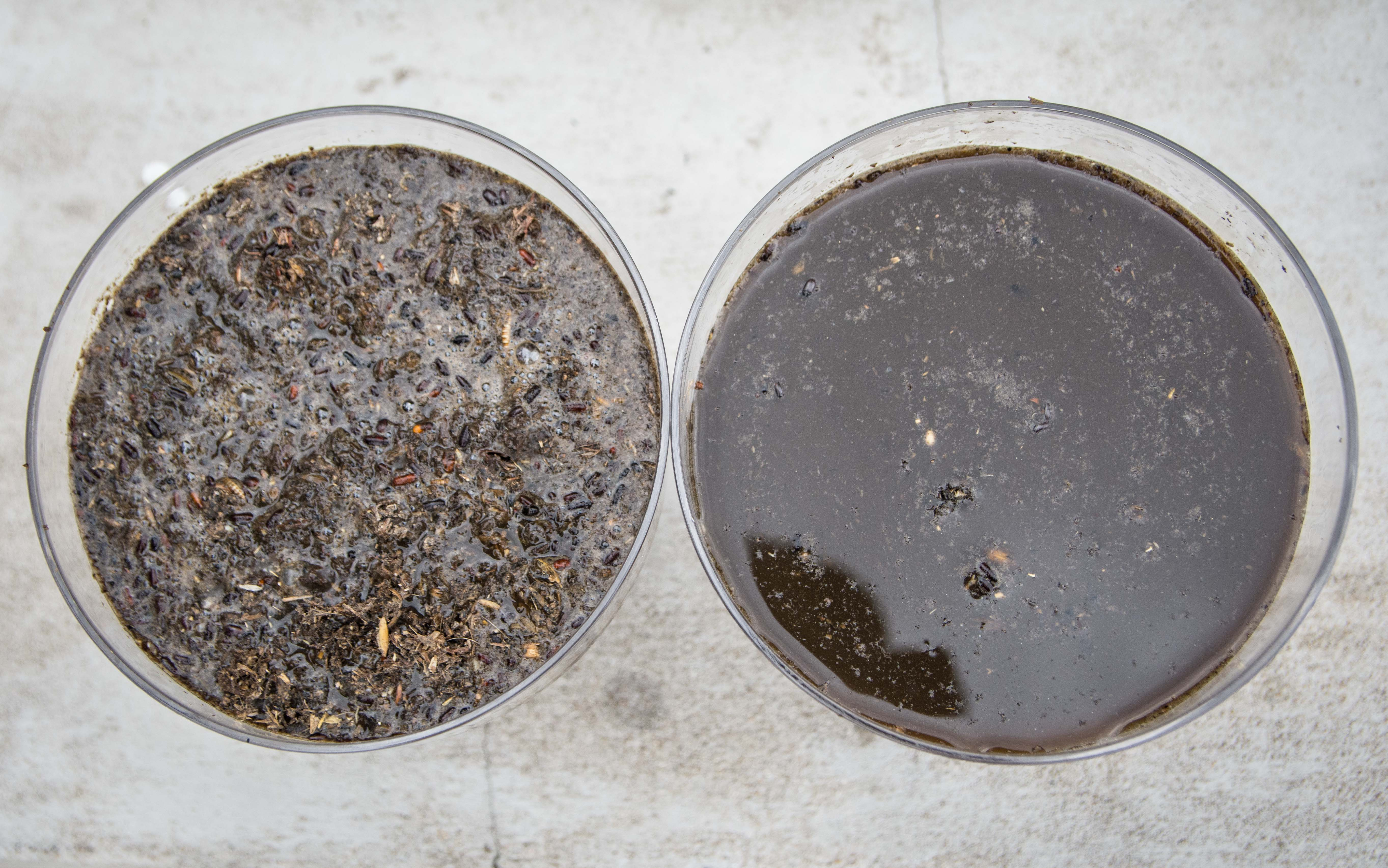 kożuch na gnojowicy